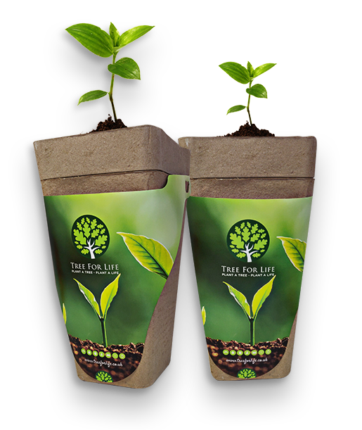Eco-friendly Biodegradeable Memorial Tree Urn